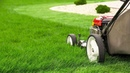How to Properly Mow a Lawn Organo Lawn