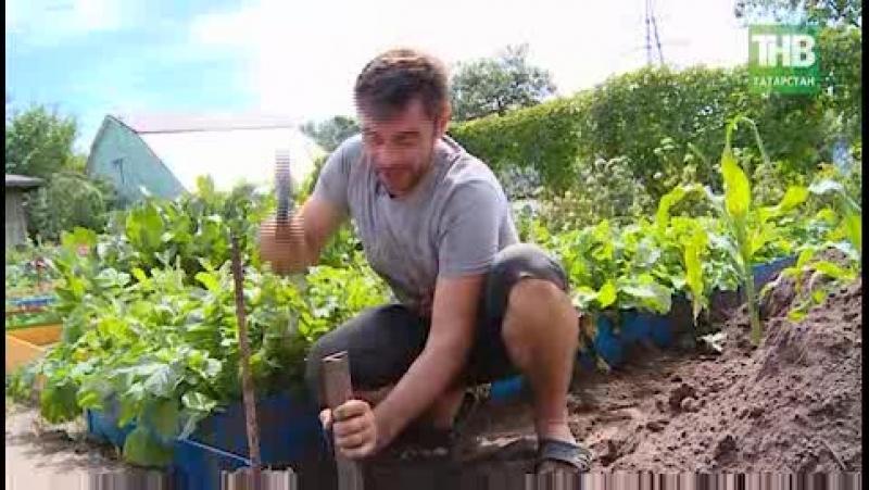 Как сделать долговечные и красивые грядки в огороде