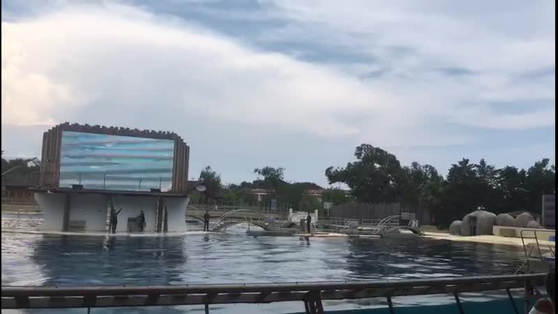 VIDEO-2019-07-15-23-53-10.mp4