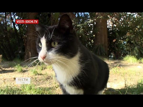 «Столовая» для котов и первое котокафе в Сочи увеличилась популяция бездомных животных