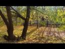 Осенние мошки