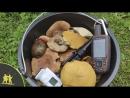 Сбор грибов в незнакомом лесу