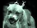 Barking Dogs Auf Wiedersehen
