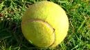 Если вы Нашли Теннисный Мячик, Не Поднимайте Его!