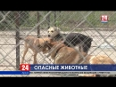 Осторожно В Крыму зафиксировали случаи бешенства у животных
