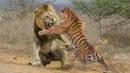 ЛЕВ В ДЕЛЕ Львы против крокодила гиен буйволов