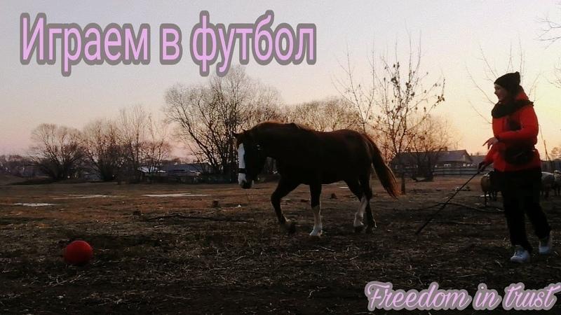 Freedom in trus | Играю с лошадью в футбол! | Игры с лошадью