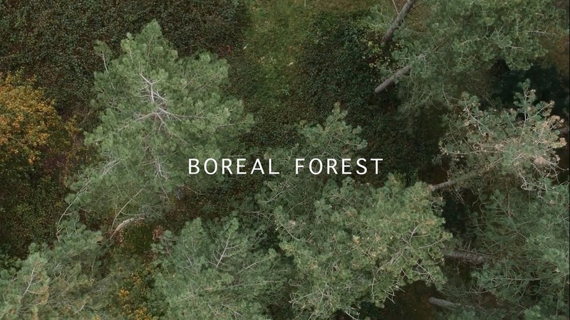 Mammal Hands Boreal Forest Official Video Gondwana Records