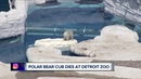 Zoo officials respond after two-day-old polar bear cub dies at Detroit Zoo