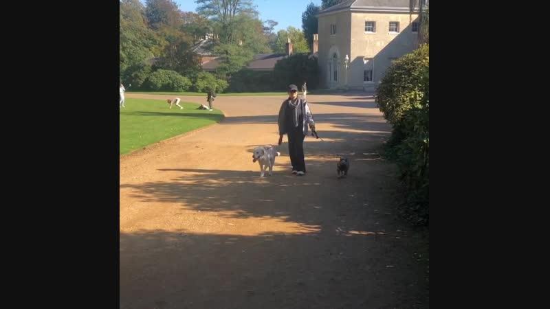 Сальма прогуливается с собаками 19 10 18