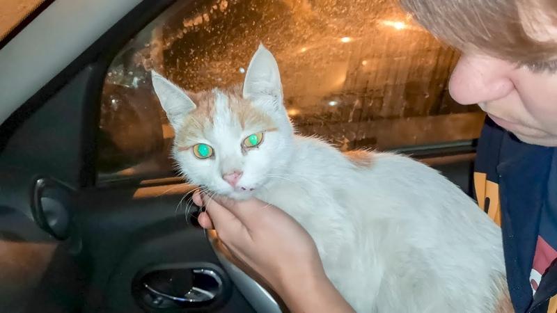 В мусоропроводе Новосибирцы нашли кошку saving injured animals