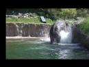 группа OurWorld. Elephant calf. Oregon Zoo