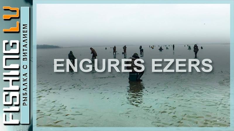 Ловля краснопёрки зимой на озере Энгурес на мотыля Makšķerēšana rudulis
