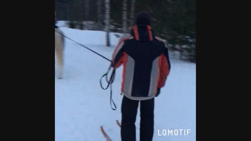 Наши выходные 👨👩👧 в ход пошли лыжи ⛷🦄❄️🌲🐶🐑
