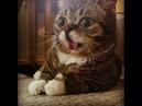 КОТЫ ИДИОТЫ СМЕШНЫЕ ЖИВОТНЫЕ FUNNY CATS