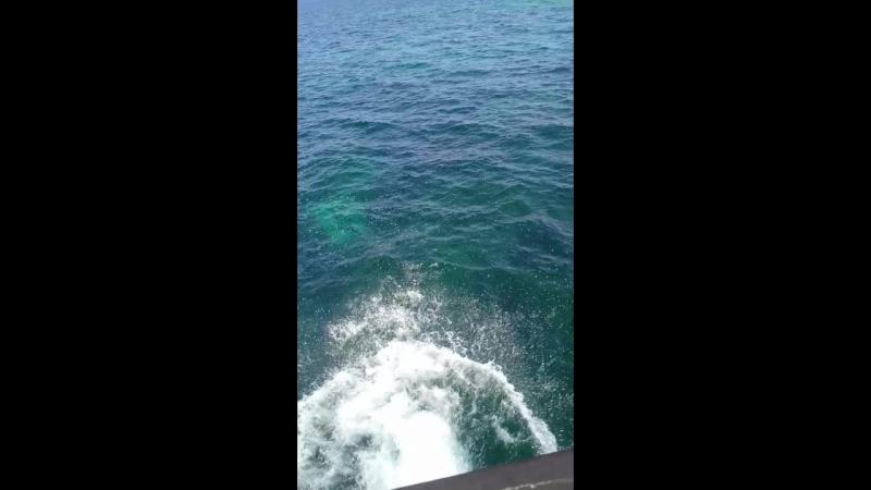 В морскую пучину с головой🌊🐠☀