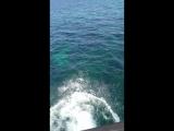 В морскую пучину с головой