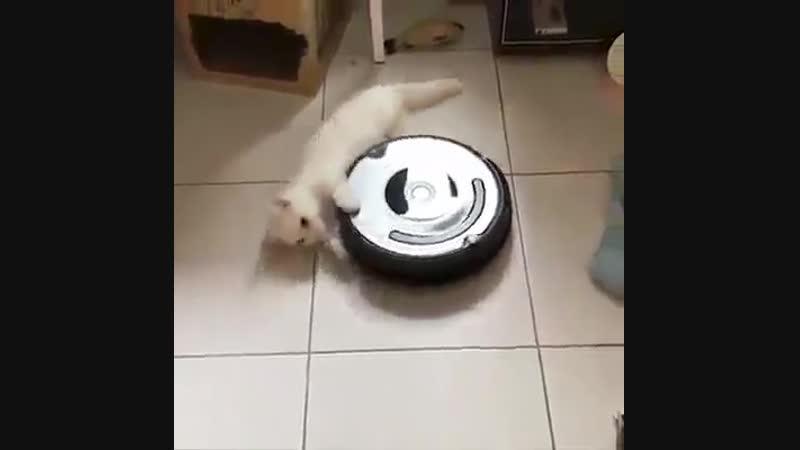 Карусель для котика