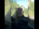 ЧМ закончился, медведи повыбирались на улицы (VHS Video)