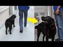 Он хотел вернуть пса взятого в приюте Но чуть не пожалел когда узнал кто был его прошлым хозяином