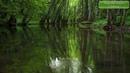 Пение птиц в лесу, расслаблящие звуки природы