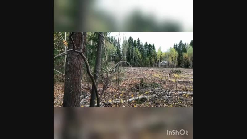 В дополнение к ранее выложенному материалу о вырубке деревьев на территории дендрария