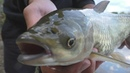 Рыбалки. Снасть -две убийцы карася на резинкеиспытания