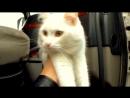 Italo disco 80s Momento I usеd Love Cat Driver Magic walking Extreme fantasy