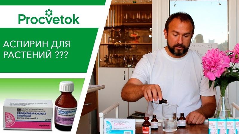 Аспирин для растений БЕСПОЛЕЗЕН. Салициловая кислота для обработки растений.