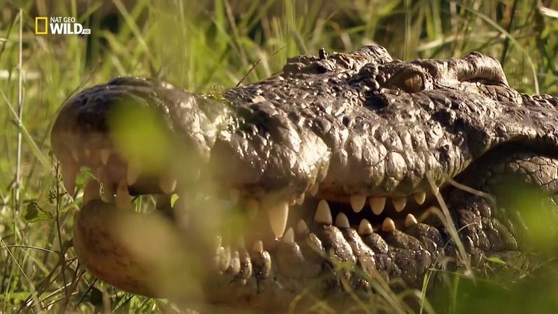 Nat Geo Wild Дикая природа Южной Африки Земля гигантов (1080р)