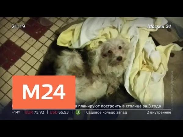 Московский патруль в Зеленограде мужчина запер дома собак и кошек Москва 24