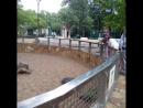 Мы на Тропе следопыта в Ленинградском зоопарке 😜🌳🐾 ⠀ Скоро ему исполнится 153 года Это один из старейших зоопарков России и