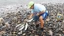 Wow cuanto pescado grande!!... pesca Pescador con la red