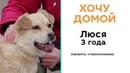 Я хочу домой Бездомные животные ищут хозяина История собаки Люси