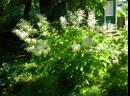 Я подарю тебе весну в честь композитора Андрея Обидина и его мелодии Я подарю тебе весну ..