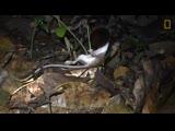 Гигантский паук съел опоссума