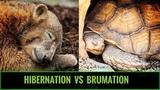 Hibernation vs Brumation for REPTILES
