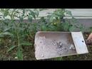 Зола золото старинное удобрение Все правила применения в огороде