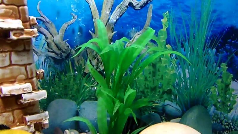 Мои рыбки галька из Фороса