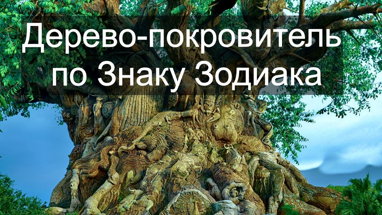 зодиак - Деревья по Зодиаку / Гороскоп друидов. NcjWbGDPJyQ