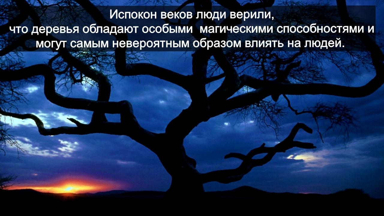 зодиак - Деревья по Зодиаку / Гороскоп друидов. -GHoaj_sWtM
