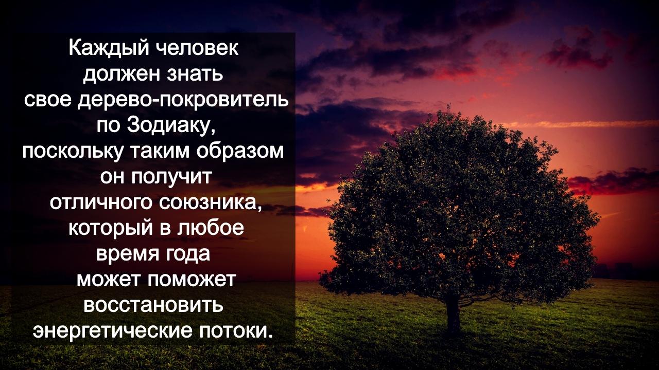 зодиак - Деревья по Зодиаку / Гороскоп друидов. GD_QVCUcF0k