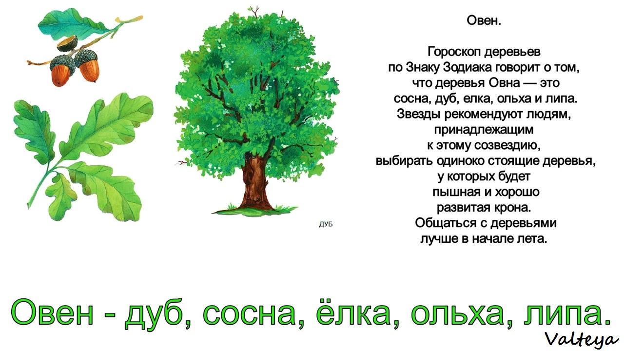 зодиак - Деревья по Зодиаку / Гороскоп друидов. IxDPjX3np0o