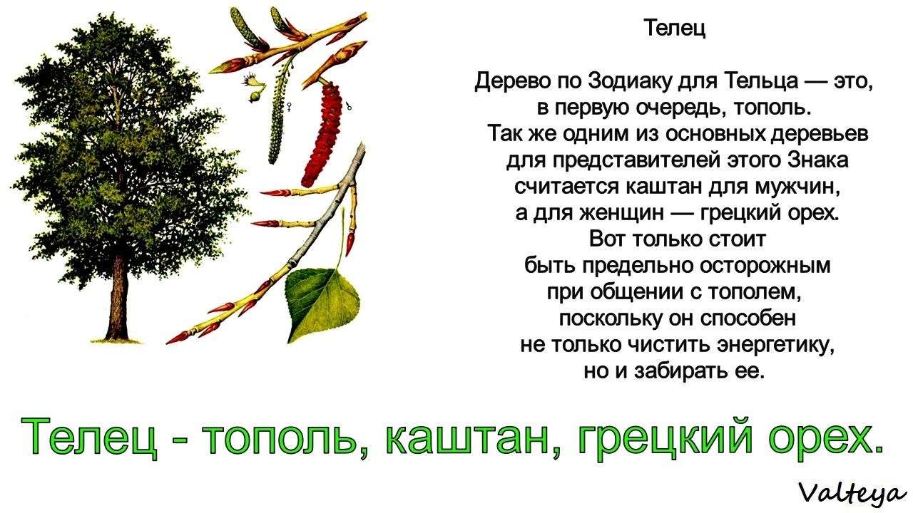 зодиак - Деревья по Зодиаку / Гороскоп друидов. 18d1lw3znAQ
