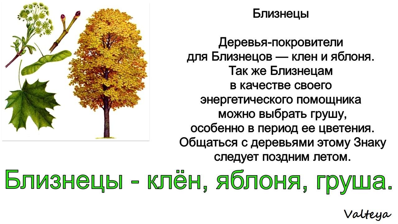 зодиак - Деревья по Зодиаку / Гороскоп друидов. VNzJ1Flui4w
