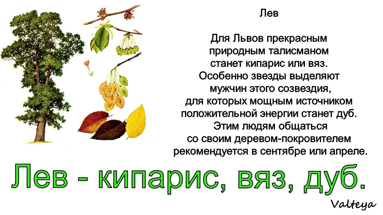 зодиак - Деревья по Зодиаку / Гороскоп друидов. ZT4RJxvW8xU