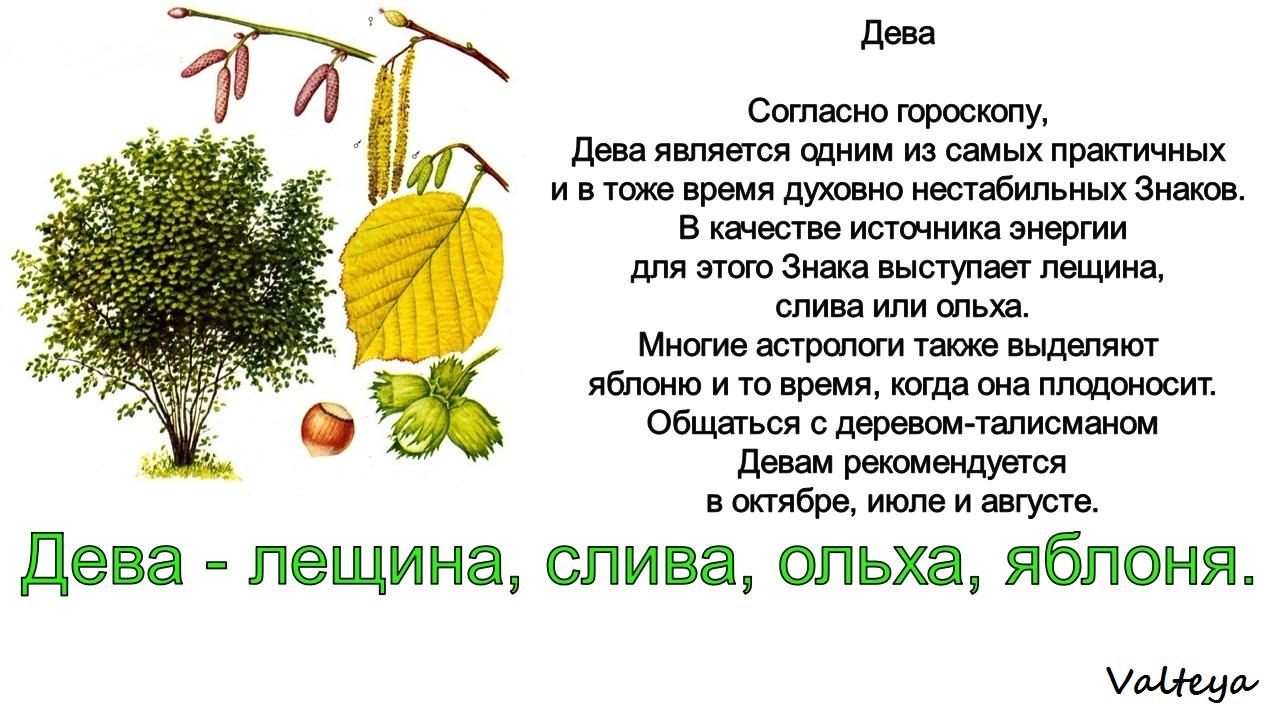 зодиак - Деревья по Зодиаку / Гороскоп друидов. R3fxs8uUs-k