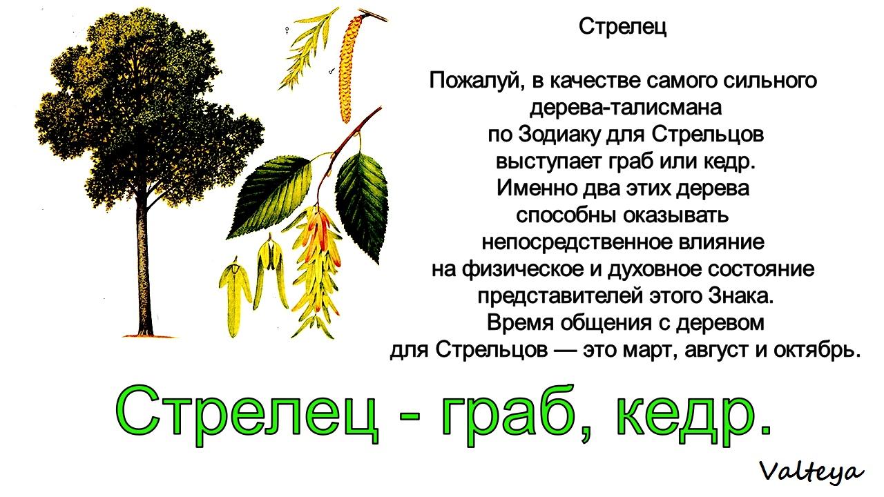 зодиак - Деревья по Зодиаку / Гороскоп друидов. HSMGEs8ot3k