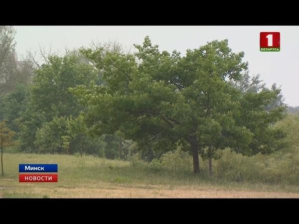В Брестской области без электричества до сих пор остаются 12 деревень