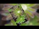 MiniMovie_Brightness_180926.mp4